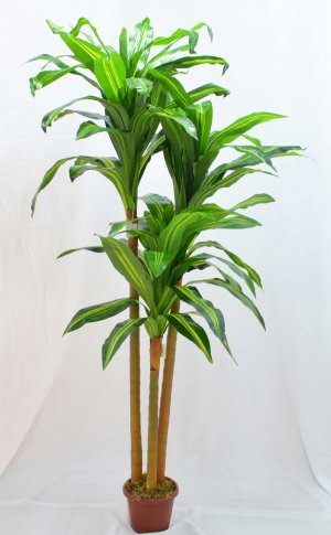 Árvore Dracena c/3 BJ02