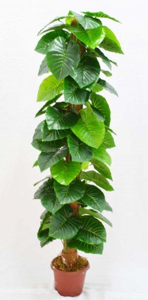 Árvore Comigo Ninguem Pode BJ08