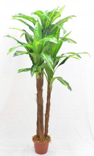 Árvore Dracena C/3 BJ15