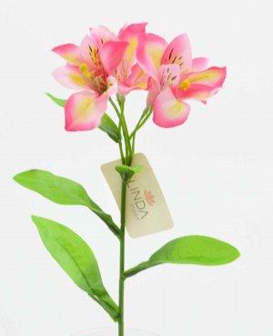 Haste  Astromelia Rosa BT03
