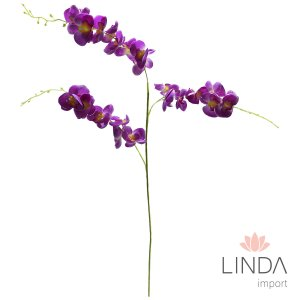 Haste de Orquidea Roxa CF06