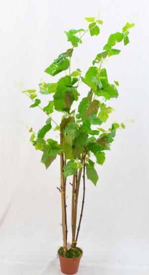 Árvore Pareira de 170cm C/4 BJ03