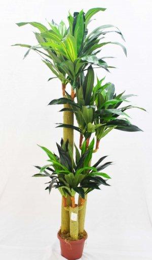 Árvore Dracena Toque Real de 170cm BJ14